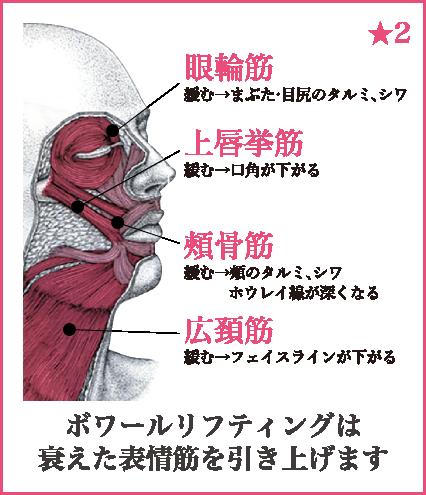 表情筋の図